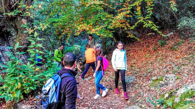 Sortida per collir castanyes a Viladrau 5 - Diumenge, 30 d'octubre de 2016